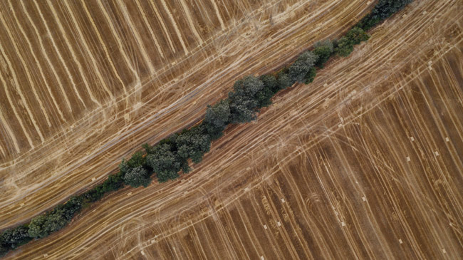 soil degradation of industrial agriculture