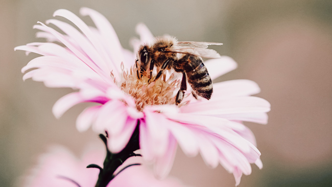 what to do on may bank holiday sustainable ideas bee landing on a pink flower