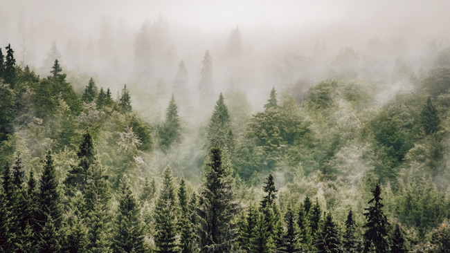 A rainforest showing trees that could be planted with Treeapp