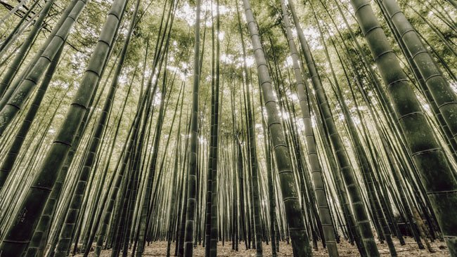 eco-friendly building materials, bamboo forest