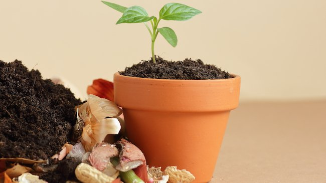 Heap of biodegradable vegetable indoor compost, decomposed organic matter on top and seedling in terracota flower pot
